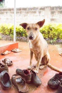 street boy puppy